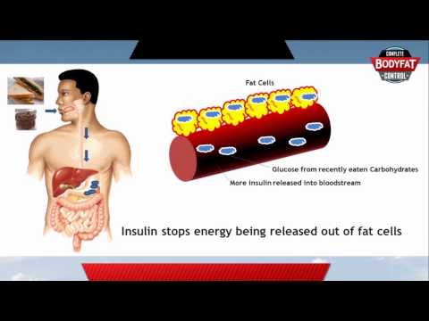 How fat loss works in your body - the suprising truth