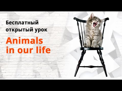 "Открытый урок на тему ""Animals In Our Life"""