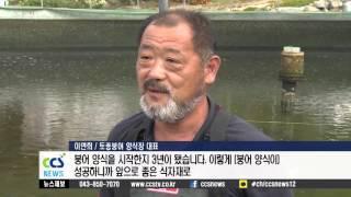 국내 유일 토종붕어 양식 성공 - CCS충북방송