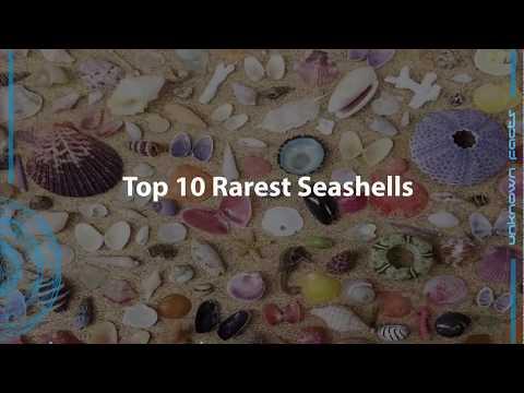 Top 10 rarest seashells
