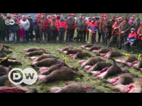 Fear among pig farmers | DW English
