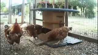 Automatic Chicken Feeders - Cf100 Plans For Construction