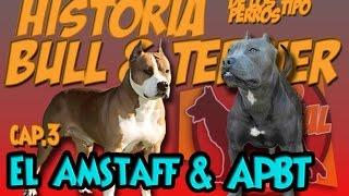 El Pitbull y el Amstaf Historia de los perros tipo Bull&Terrier Capitulo 3.