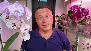 ОРХИДЕИ ПОЛИВАТЬ ЛУЧШЕ КАКИМ СПОСОБОМ оптимальныи полив орхидеи