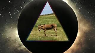 Gov't Mule - Shine On You Crazy Diamond, Pts. 1-5 (live, 2008)