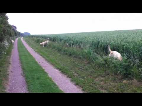 Dogs jumping in field