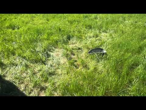 How rotational grazing becomes mob grazing