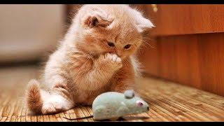 Смешные кошки и коты июнь 2019 Новые приколы с котами и собаками коты приколы funny cats animals #86