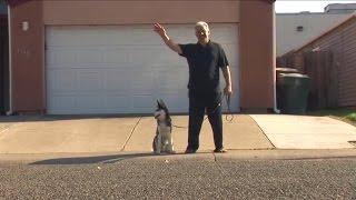The No Treats Dog Prodigy Dog Trainer