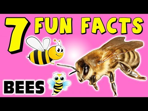 7 FUN FACTS ABOUT BEES! BEE FACTS FOR KIDS! Insects! Learning Colors! Honey! Nest! Funny Sock Puppet