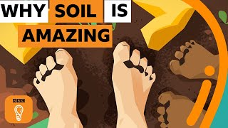 Why soil is one of the most amazing things on Earth | BBC Ideas