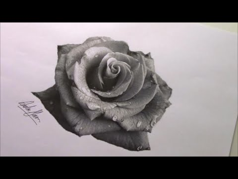 Rose drawing. How to draw a rose. Realistic rose drawing ...