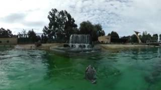 Go swimming with the penguins - 360 video at RZSS Edinburgh Zoo