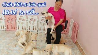 Bà nội từ quê lên Hà Nội thăm gđ Củ Cải trước khi Chút Chít về nhà mới