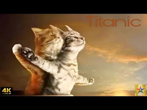Titanic Title Track [4K] | Singing Cats