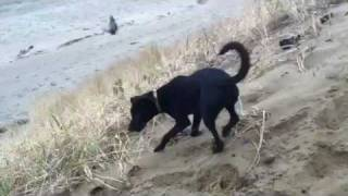 Train Dog To Fetch