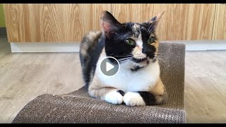 WSHS Kids' Corner - Humane education series - cat senses