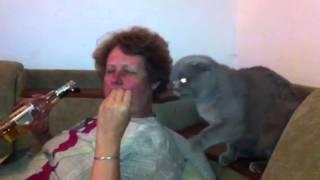 Кот отнимает кальмары
