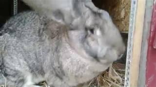 кролики♡обзор♡новые маточники для крупных пород♡