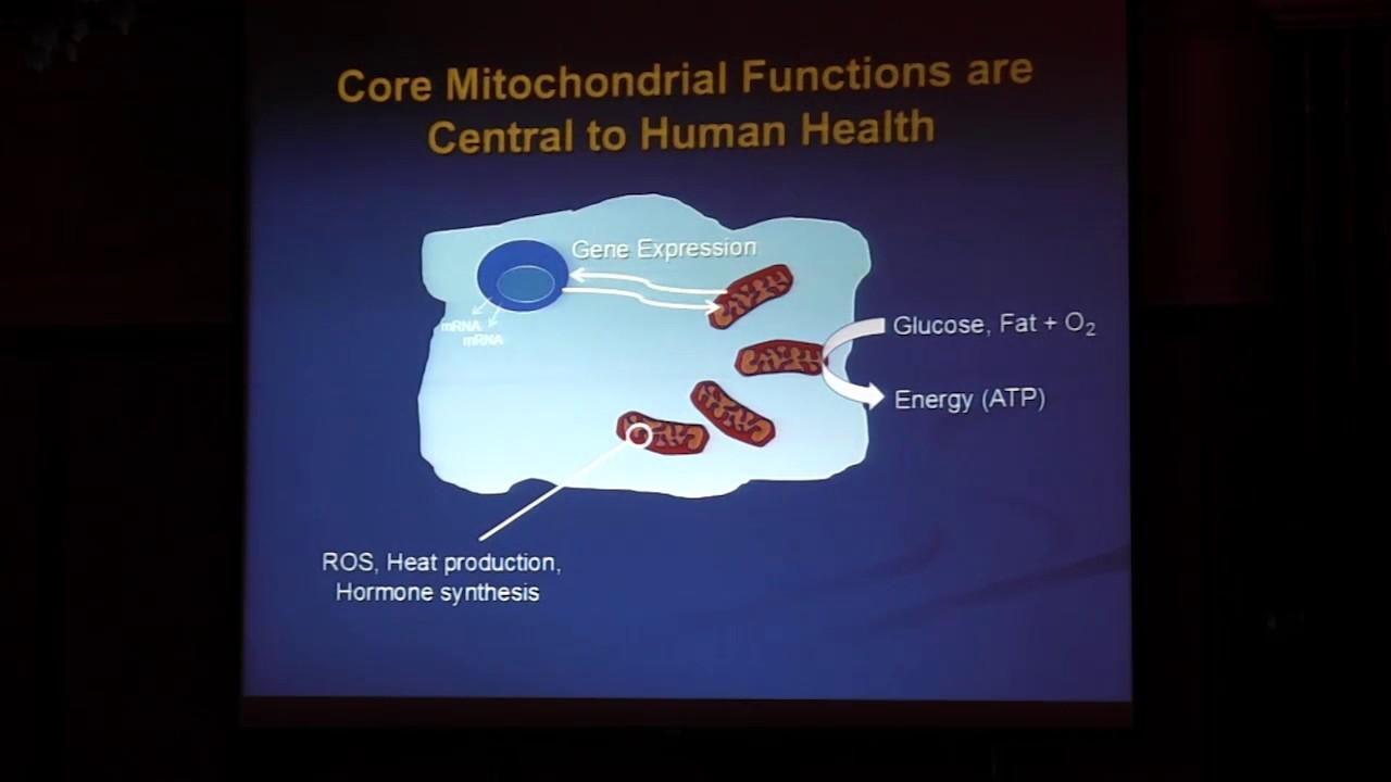 disfunción mitocondrial y diabetes