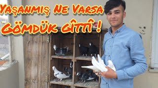Muratin 8 Çift Adana Güvercinleri