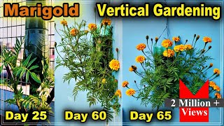How To Grow Marigold Plant in Bottle l Vertical Gardening l How To Use Waste Plastic Bottle