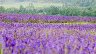 Helmut Zacharias - Cuando vuelvan a florecer las Lilas - (Audiofoto).wmv