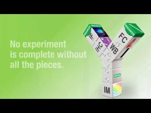 Bio-Rad Antibodies – No Experiment is Complete without All the Pieces