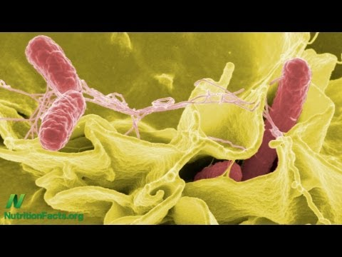 Salmonella in Chicken & Turkey: Deadly But Not Illegal