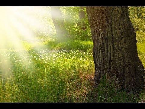 SunWisher Spiritual Community