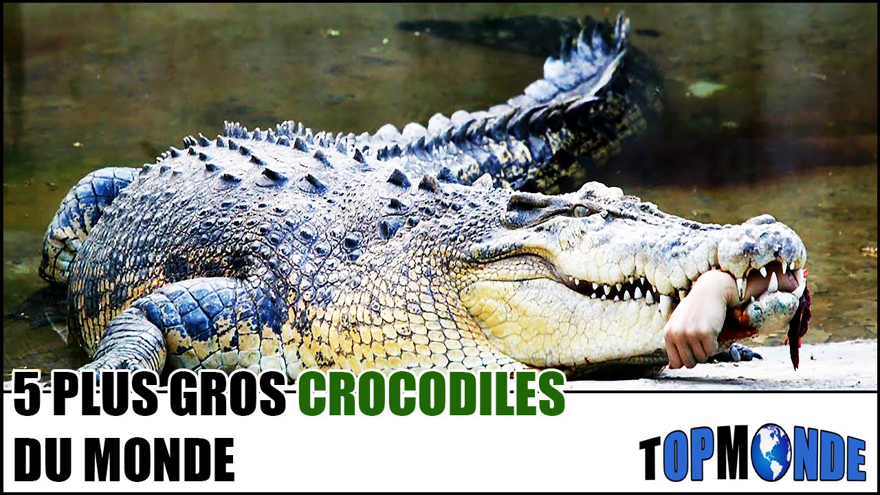 top 5 des plus gros crocodiles du monde youtube. Black Bedroom Furniture Sets. Home Design Ideas