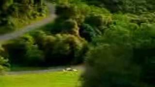 Car viral video.3gp