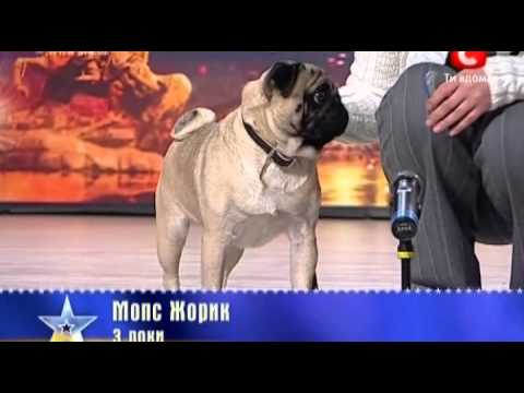 Украина мае талант 2  Киев  Собака Жорик