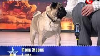 Украина мае талант 2 / Киев / Собака Жорик