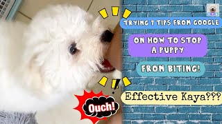 Trying these TIPS  on How to Stop a Puppy from Biting (TAGALOG) | Baxia the Bichon