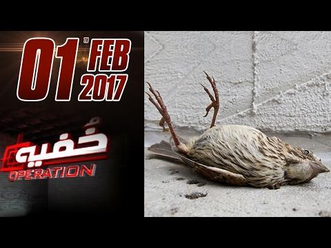 Wild Animals ki Jaan ko Khatra | Khufia Operation | SAMAA TV | 01 Feb 2017