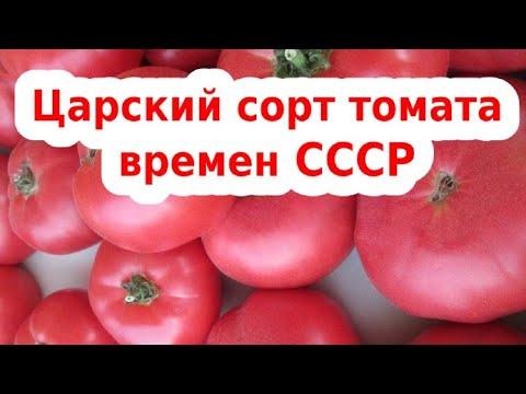 Очень урожайный сорта помидор- обзор! Розовый гигант - любимчик помидорчик