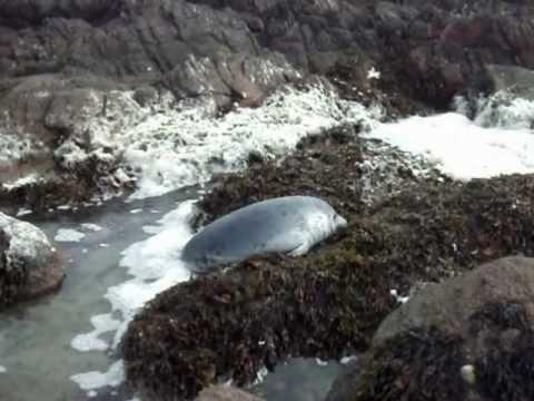 seal near carnsore point
