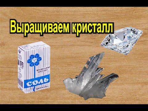«моллюски, ракообразные, кораллы» на интернет-аукционе au. Ru. Растения и. Коралл натуральный горгонария цена за 1 ветку. Растения и.