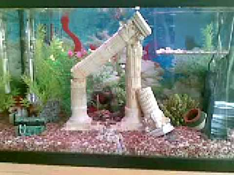Mi acuario de peces tropicales youtube for Lista de peces tropicales para acuarios