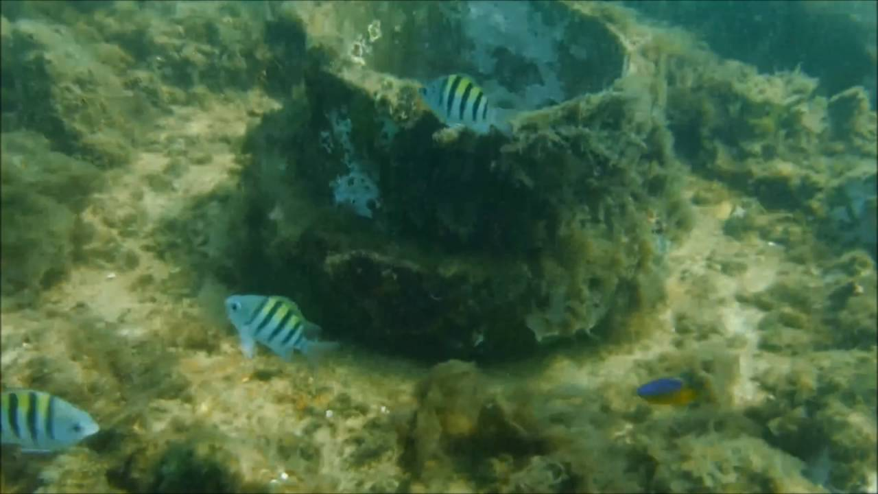 Navarre Beach Gulf Snorkeling Reef