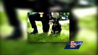 Woman Walking Down Street Attacked By Police K9