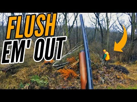 Rabbit Hunting Was A HUGE Bust(Rabbit Hunting With Dogs In Pennsylvania)