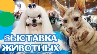 #animals В Мире Животных Выставка Собак и Кошек ВИДЕО ДЛЯ ДЕТЕЙ