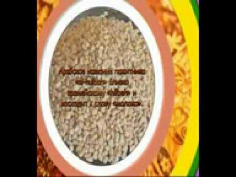 Трава пажитник (фото): полезные свойства применение и