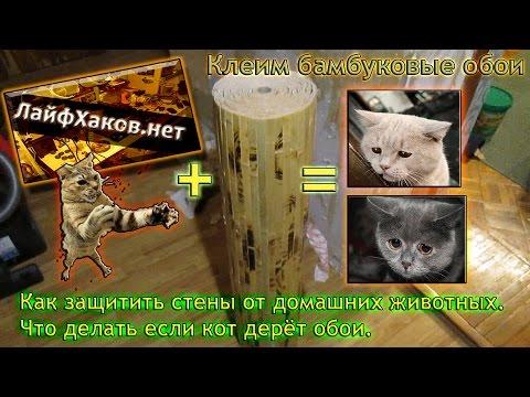 Как защитить стены от домашних животных. Что делать если кот дерёт обои. Клеим бамбуковые обои