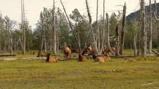 SBTN - HÀNH TRÌNH XUYÊN MỸ P3: Alaska (tiếp theo)