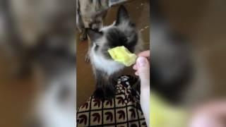 кошка отказывается от еды / собака просит еду