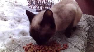 7 собак и 4 кошки Green Edge Bryansk (Брянск)