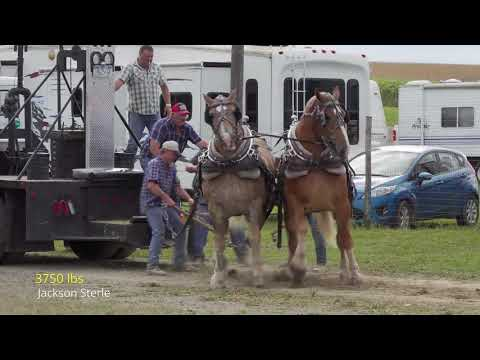 2019 Woodhull,NY Heavyweight Horse Pull